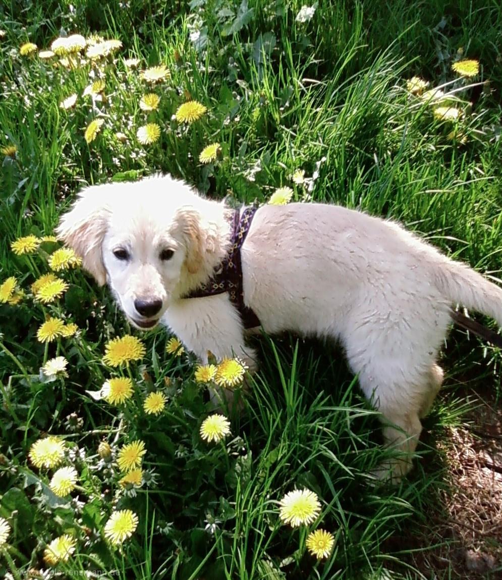 Lola im Gras