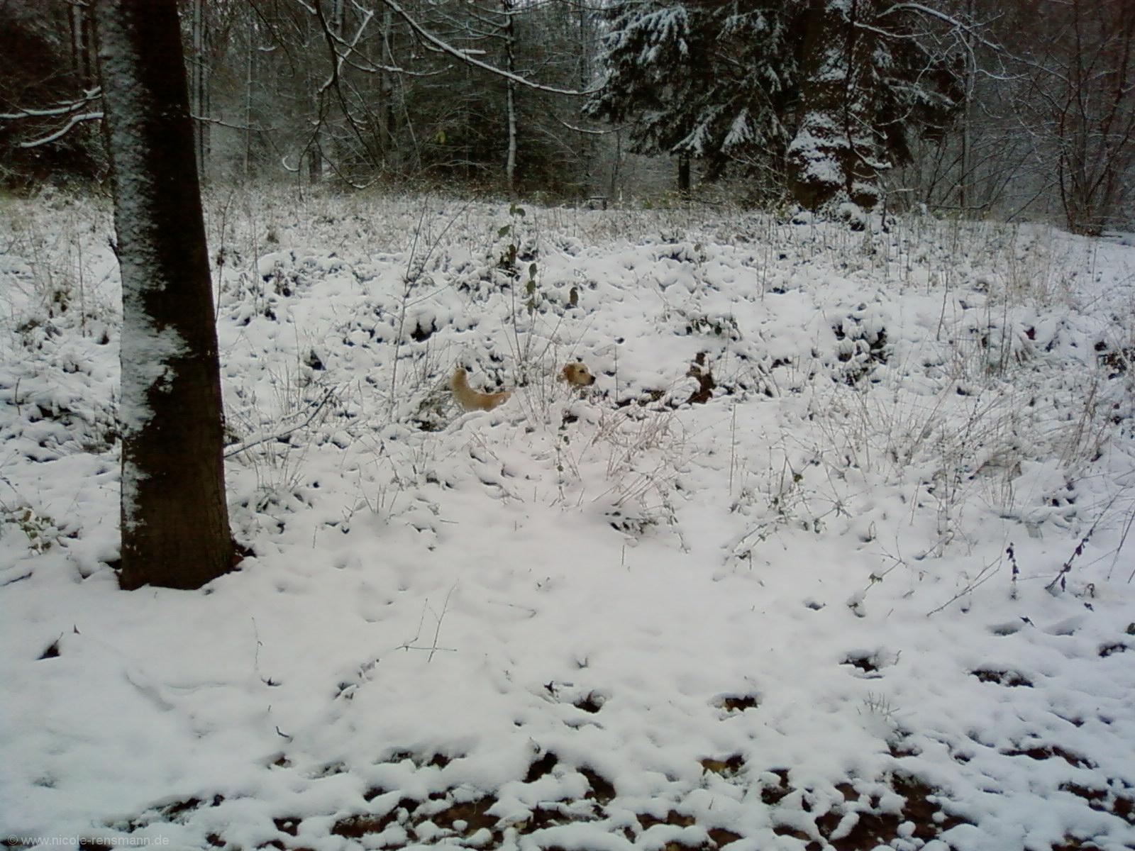 Lola im Schnee2
