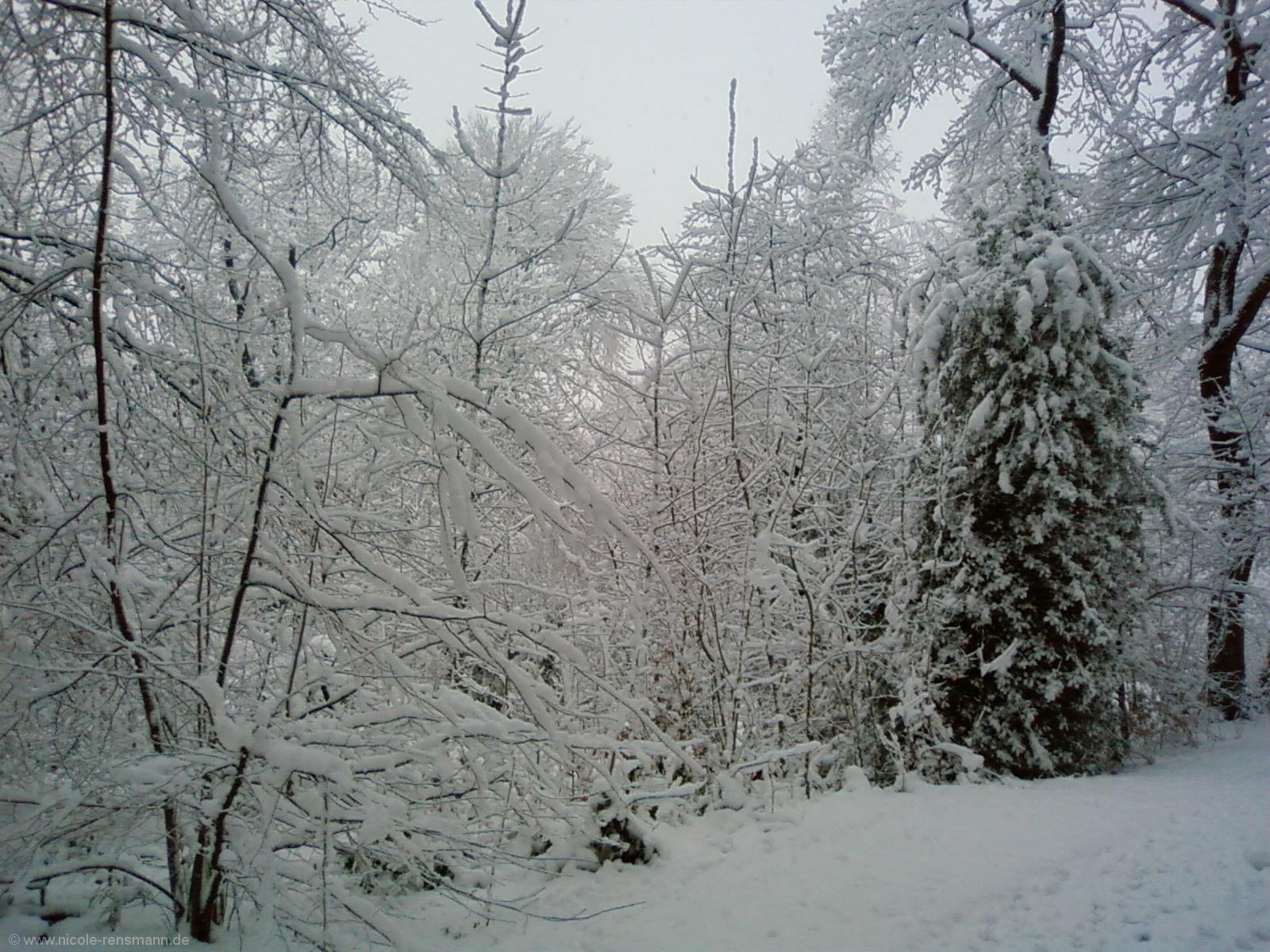 Schnee 2008 - 3