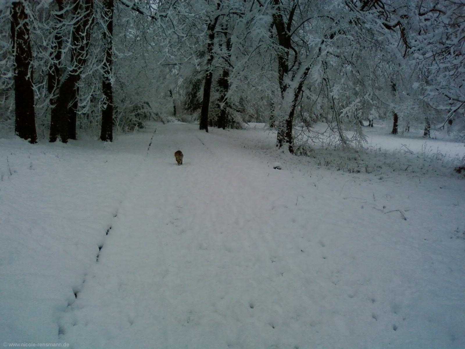 Schnee 2008 - 2
