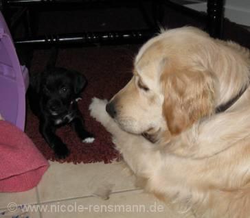 Lola und Yule