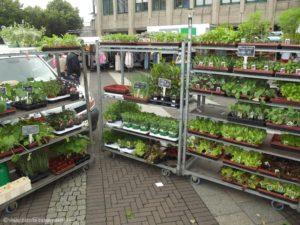 Angebot Kräuter und Gemüsepflanzen von Gemüsebau Basen
