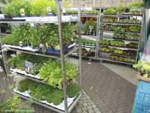 Bei Gemüsebau Basen erhalten Sie eine Vielzahl an frischen und hochwertigen Kräutern im Topf.