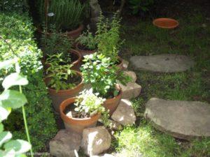 Eine meiner kleinen Kräuterecken im Garten: Rosmarin, Oregano, Salbei, Melisse und verschiedenen Minz-Sorten