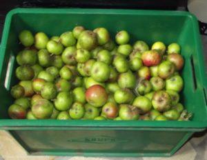 Kiste Äpfel