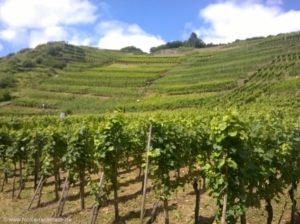 ... supergutes Wetter und überall Wein.