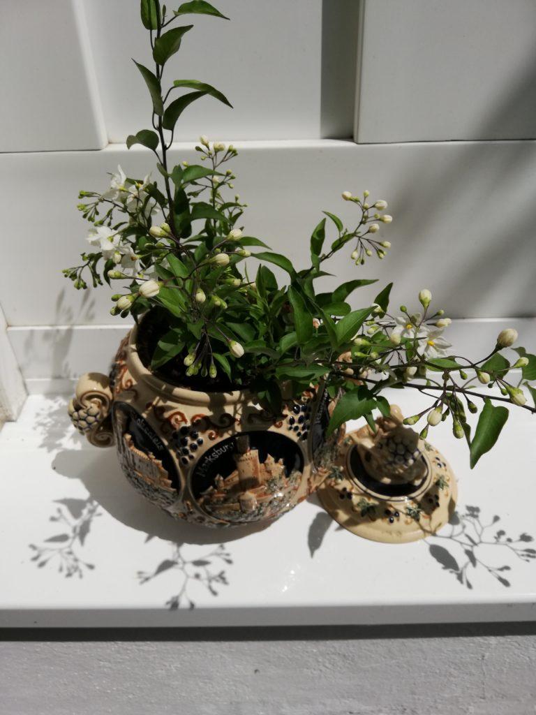 Alte Bowle, neu bepflanzt
